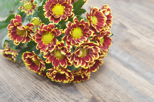 Bouquet of beautiful chrysanthemums on table close-up  Stock photo © inxti