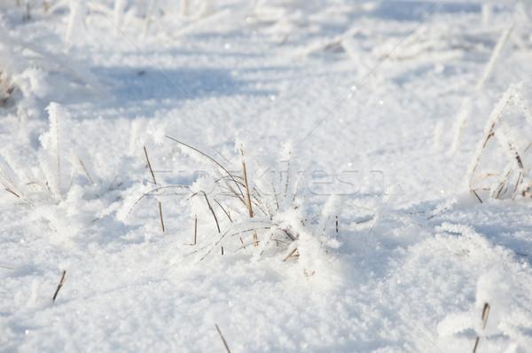 ストックフォト: 草 · 雪 · 冬 · 白