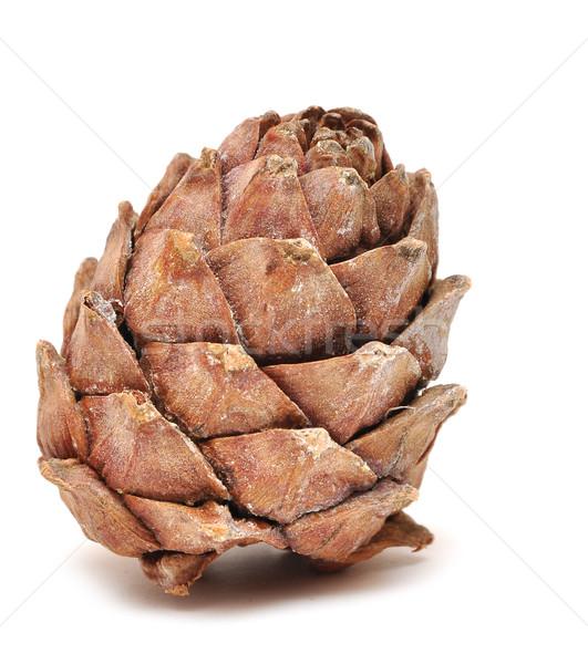Cedro cone isolado branco noz pinho Foto stock © inxti