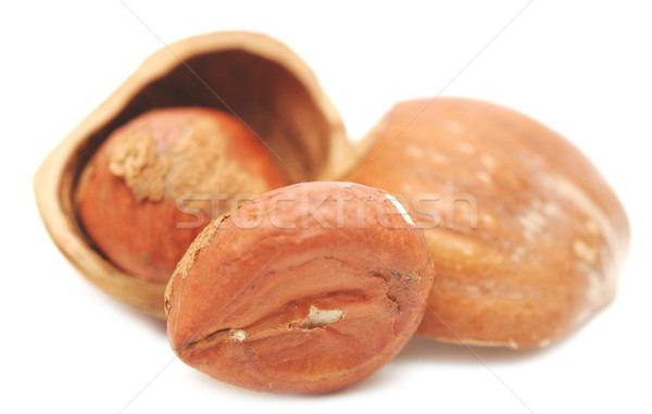 nuts a filbert  in a shell Stock photo © inxti