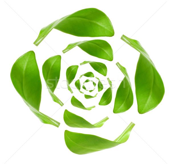 Eco groene energie recycling geïsoleerd witte natuur Stockfoto © inxti