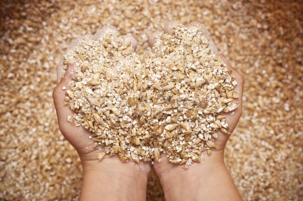 child's hands holding milled grain Stock photo © inxti