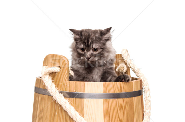 Cute grey cat sitting in wooden barrel on white background Stock photo © inxti