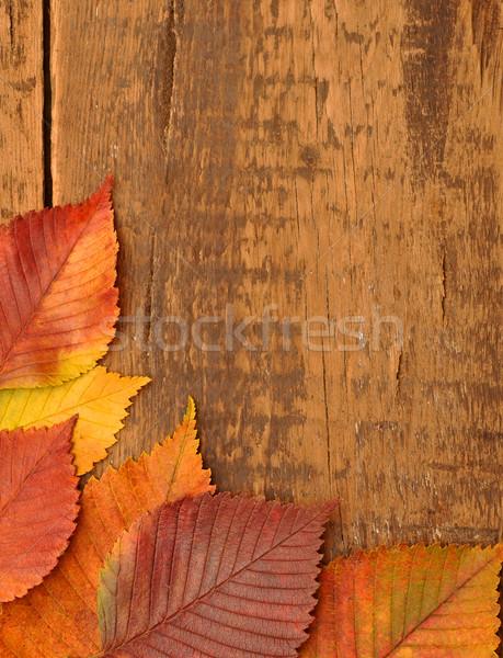 黄色 紅葉 古い木材 暗い テクスチャ 木材 ストックフォト © inxti