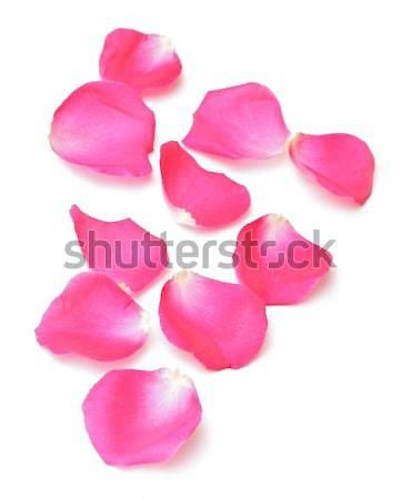 Rose Petals Border Stock photo © inxti