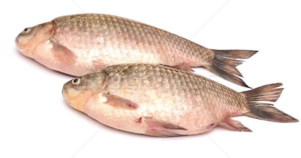Crucian carp fish isolated on white background  Stock photo © inxti