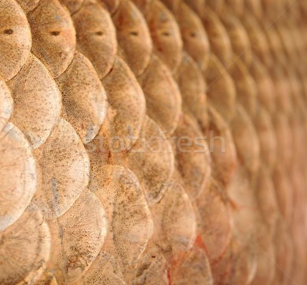 Macro shot of roach scales, natural texture Stock photo © inxti