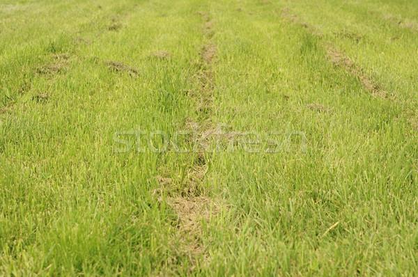 Länge geschnitten Gras Rasen Frühling Natur Stock foto © inxti