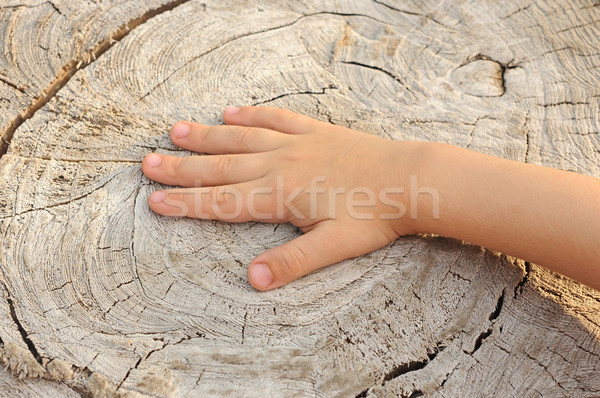 Children's hand is located on an old stump  Stock photo © inxti
