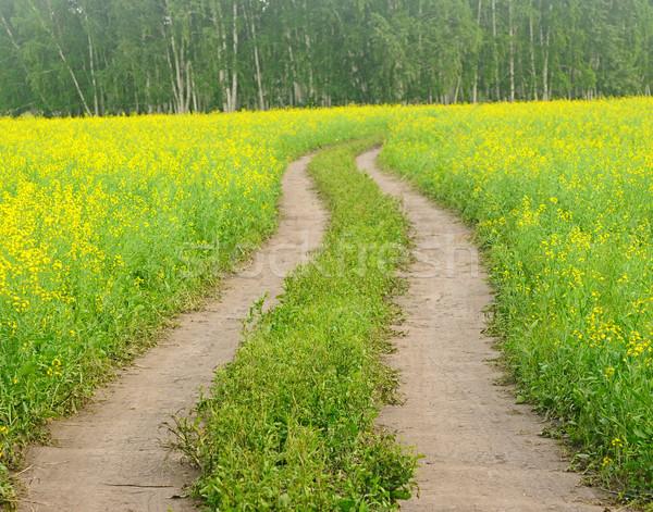 дороги цветения полях Казахстан небе природы Сток-фото © inxti