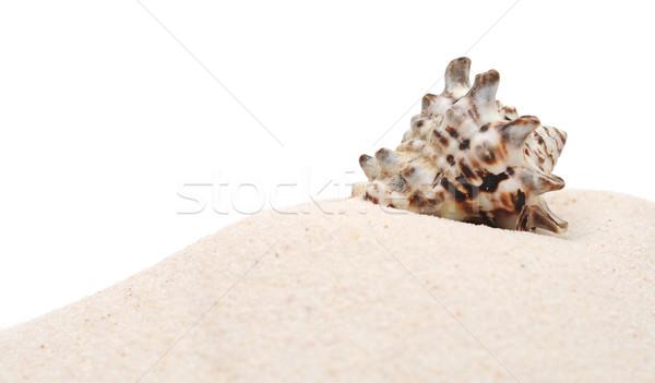 closeup beautiful sea shell with sand on white background Stock photo © inxti