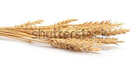 ストックフォト: 小麦 · 耳 · 孤立した · 白 · 食品 · 背景