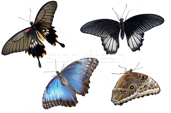 Stock photo: Collection of colorful butterflies isolated on white