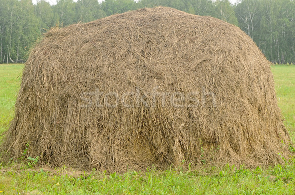 old traditional hay stacks, typical rural scene Stock photo © inxti