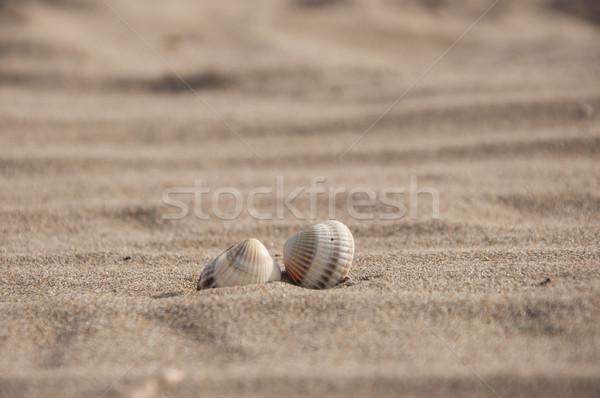 Stok fotoğraf: Kabuk · plaj · doğa · yaz · seyahat