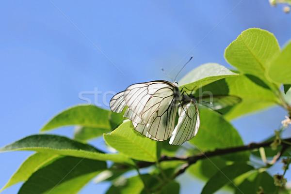 Zwei Schmetterling Blumen Frühling Natur Design Stock foto © inxti