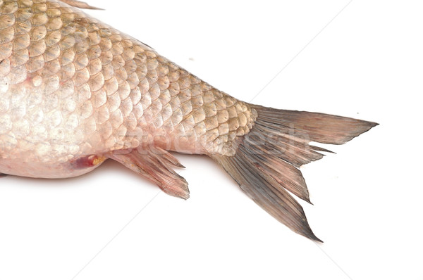 Fish tail isolated on white background  Stock photo © inxti