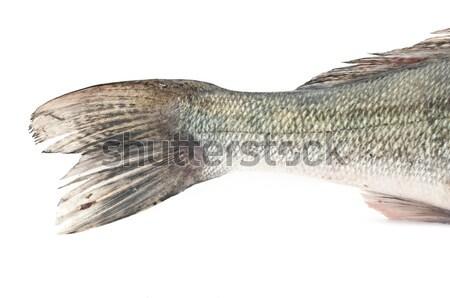 Cauda peixe isolado branco comida laranja Foto stock © inxti