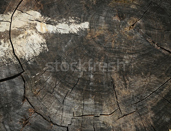 background made of old wooden stump  Stock photo © inxti