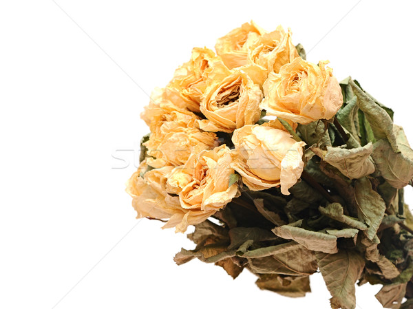 Withered rose bouquet  Stock photo © inxti