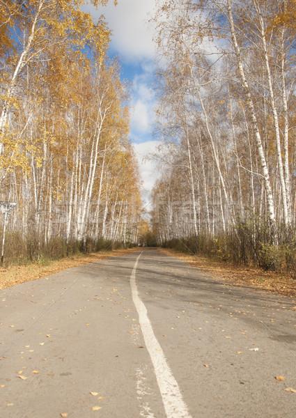 út ősz nyírfa erdő fa levél Stock fotó © inxti