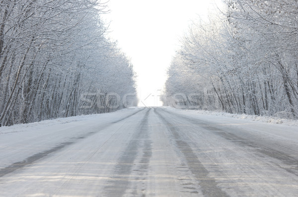Stock photo: road and hoar-frost on trees in winter