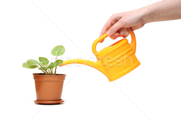 closeup hand watering a plant with watering can Stock photo © inxti