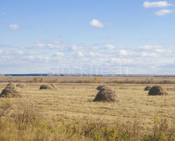 Kuru ot yığını çim alanı ağaç gıda yaz alan Stok fotoğraf © inxti