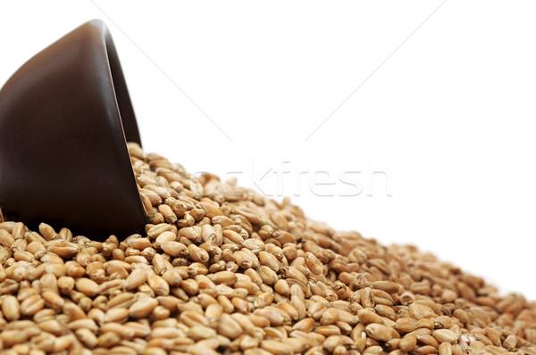 чаши зерна пшеницы изолированный белый текстуры здоровья Сток-фото © inxti