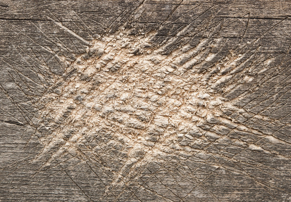 shabby cut tree trunk scored surface texture background  Stock photo © inxti