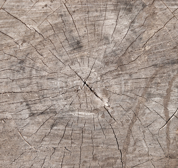 Old timber and trunk texture strip  Stock photo © inxti