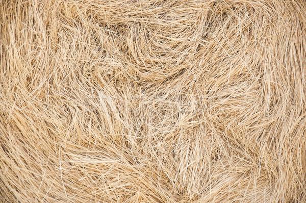 Golden straw texture background, close up Stock photo © inxti