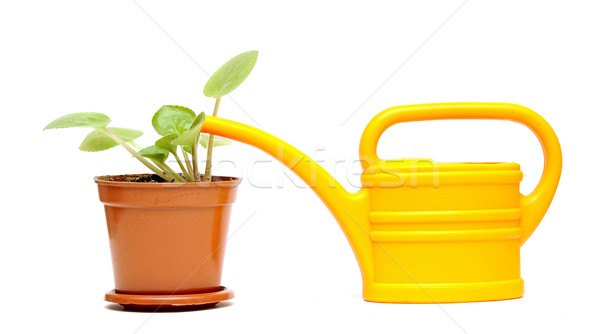 potted flower and  yellow watering can  Stock photo © inxti