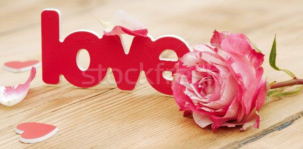 red-white rose and scattered flower petals and the word love on  Stock photo © inxti