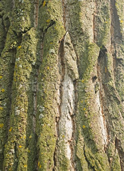 Arbre écorce texture résumé nature design Photo stock © inxti