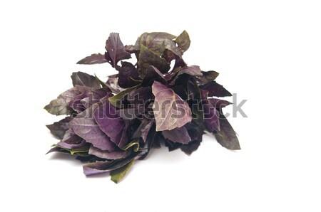 fresh basil herbs on white background Stock photo © inxti