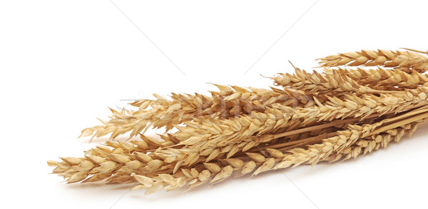 Wheat ears isolated on white background Stock photo © inxti