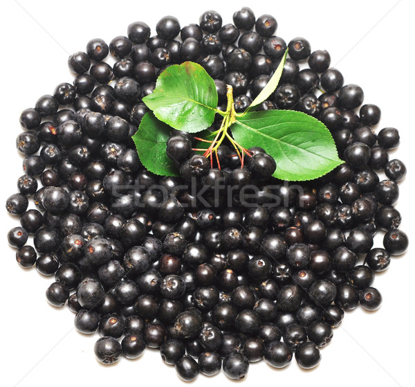 black chokeberry. Aronia melanocarpa  Stock photo © inxti