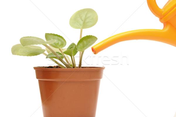 Foto stock: Mão · planta · regador · casa
