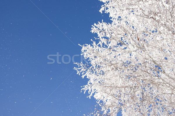 Branch of a tree in hoarfrost on a background of blue sky  Stock photo © inxti