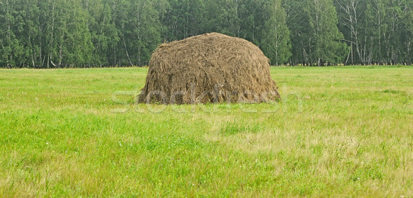 Hooi natuur boerderij weide milieu flora Stockfoto © inxti