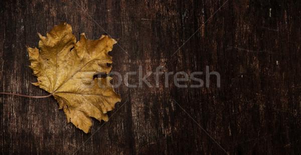 dry maple leaf on wood background Stock photo © inxti