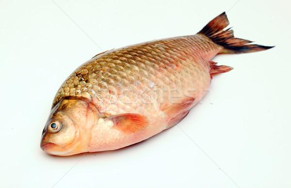 Crucian carp isolated on white background Stock photo © inxti