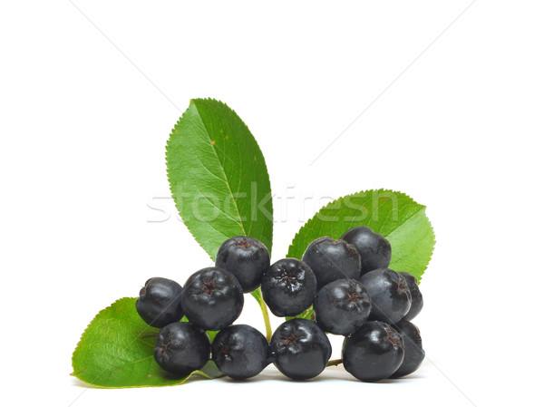 black chokeberry, Aronia melanocarpa  Stock photo © inxti