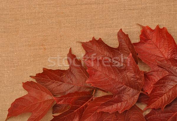 Stok fotoğraf: Sonbahar · yaprakları · çuval · bezi · doğa · sanat · kırmızı · çanta