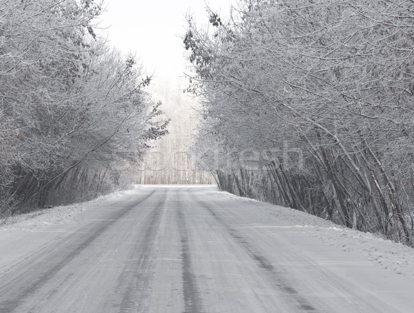 road and hoar-frost on trees in winter  Stock photo © inxti