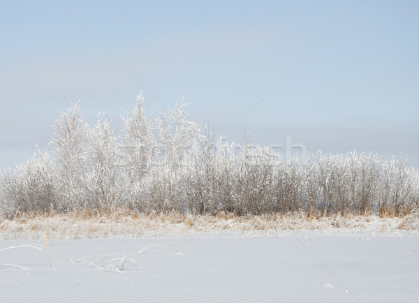 Winter landscape with snow Stock photo © inxti