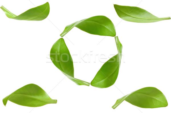 Eco groene energie recycling geïsoleerd witte blad Stockfoto © inxti
