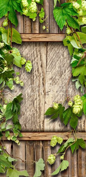 Thrickets of hop on a wooden wall  Stock photo © inxti