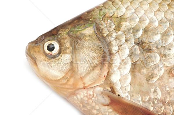 Karper geïsoleerd witte voedsel achtergrond vissen Stockfoto © inxti